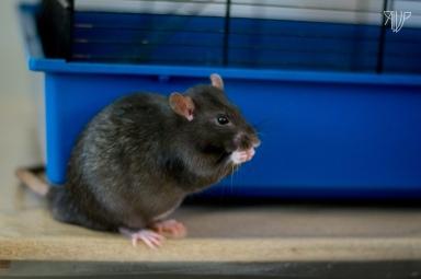rats-23