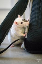 rats-28
