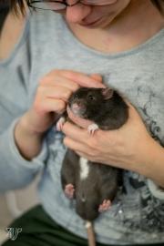 rats-5